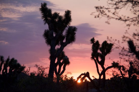 Twentynine Palms, CA: Joshua Tree National Park