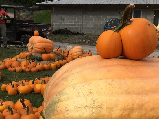 Harbor Springs, MI: Pumpkin Patch