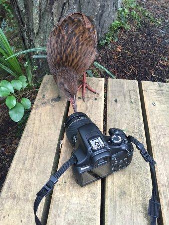 Stewart Island, Nueva Zelanda: photo2.jpg