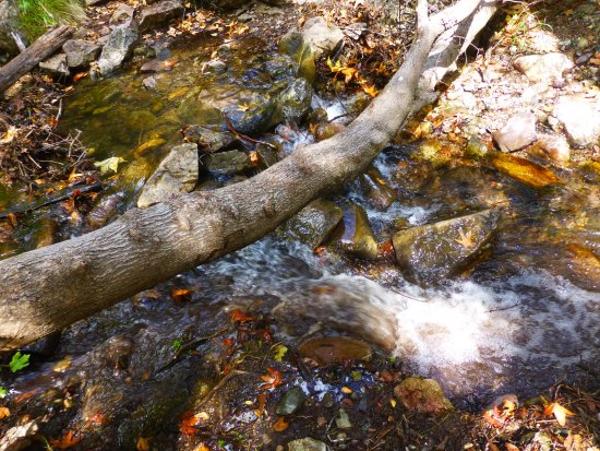 Hereford, Arizona: Along the trails