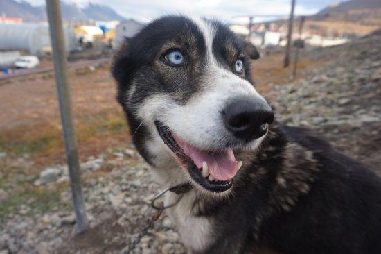 Лонгйирбиен, Норвегия: Blue eyes
