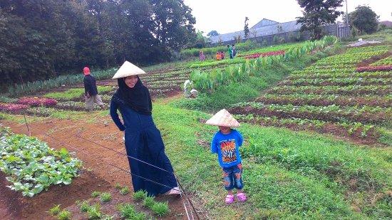 Um Nurseries Organic Farm