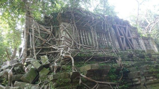 Провинция Сием Рип, Камбоджа: DSC_0545_large.jpg