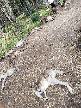 Currumbin, Australien: 20160922_114009_large.jpg