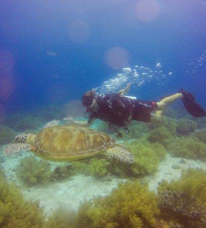 Panglao Island, Filipinas: Alona Divers
