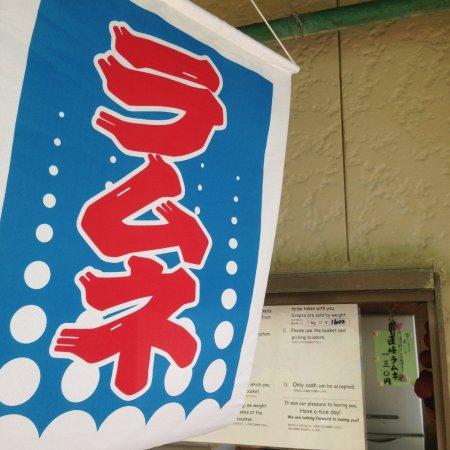 Kurume, Japan: 事務所前の旗
