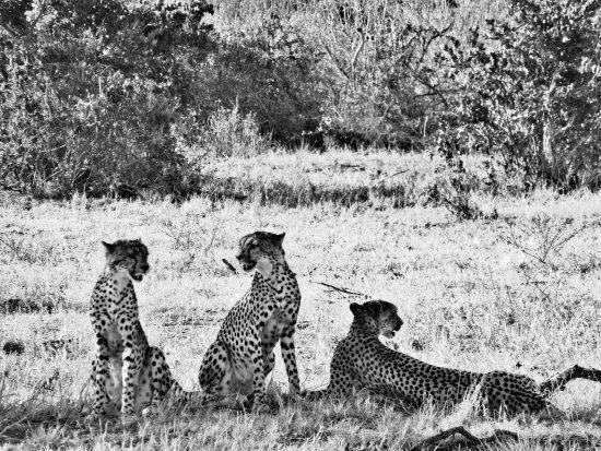 Thomas Tours & Safaris - Private Day Tours : Emozionante!