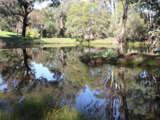 Mudgee, Australien: Bush Setting