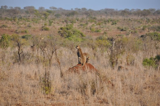 Marloth Park, แอฟริกาใต้: Game drive Kruger Park with Kerrie.