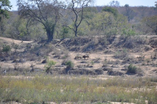 Marloth Park, แอฟริกาใต้: We've seen the Big Five before lunch!