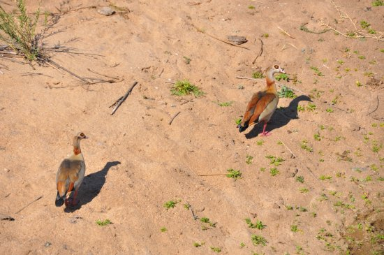 Marloth Park, Νότια Αφρική: Kerrie weet heel veel over vogels in Kruger Park.