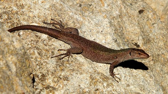 Hotel Borgo Pantano: A friendly lizard in the grounds