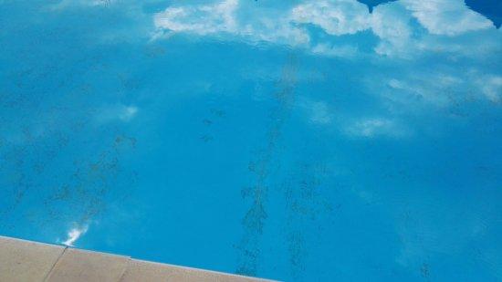 Blue Princess Beach Hotel & Suites: Pool die ganze Woche nicht gereinigt