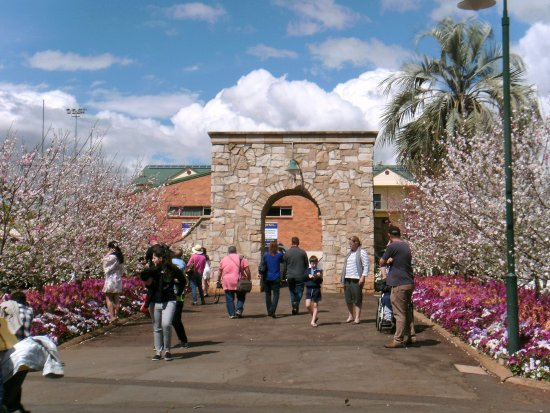 Toowoomba, Avustralya: Stone arch way lined with blossom