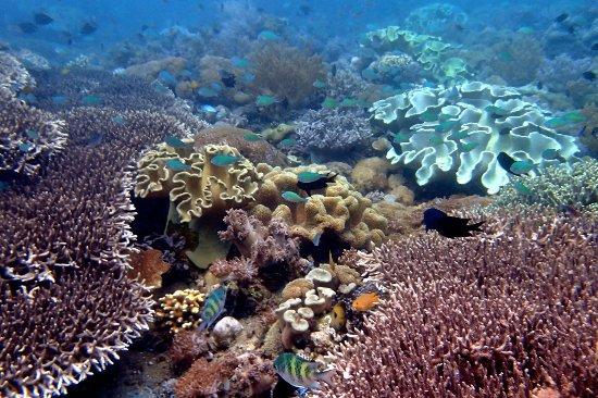 Larantuka, Indonesia: Snorkelling in Wureh (Adonara)