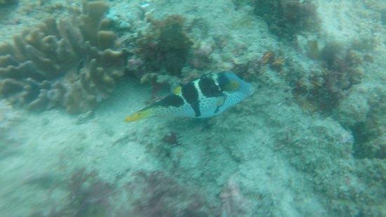 Bali Jet Set Dive and Marine Sports : photo9.jpg