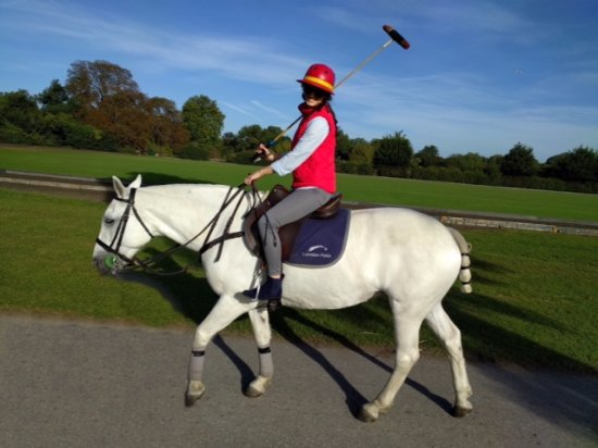 Richmond-upon-Thames, UK : Fanta -- a great, low-key horse to learn the basics on :)