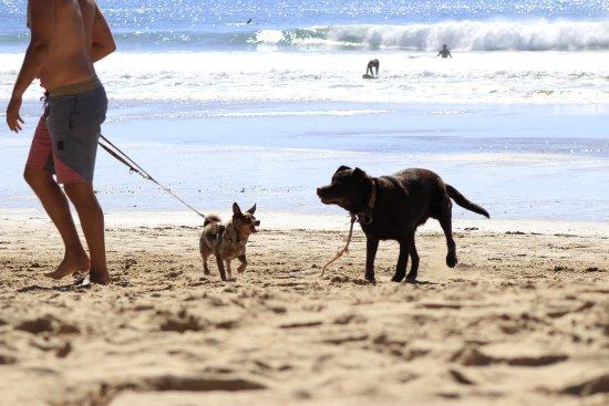 Arrifana Beach : Paseando con perros
