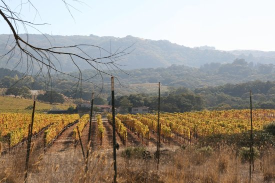Rohnert Park, Kalifornia: Wine Country