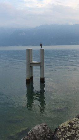 Cully, Schweiz: photo4.jpg