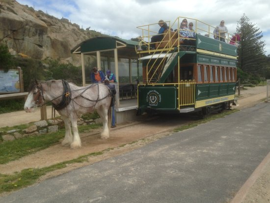 Victor Harbor, Australia: The Victor Harbour horse drawn tram waits at Granate Island for the next journey