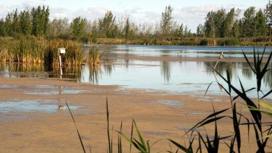 Boucherville, Canadá: Le marais de la Frayère