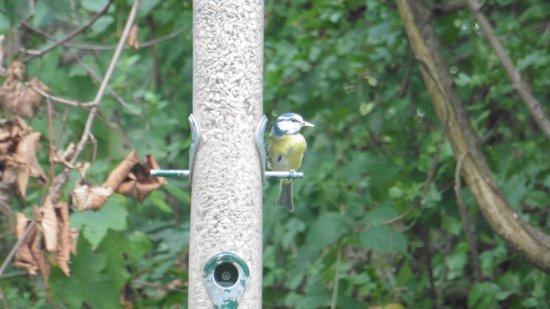 Horsham, UK: Wildlife