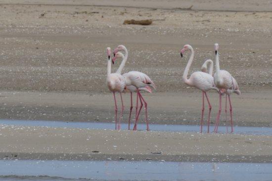Walvis Bay, Namibia: Flamingo's