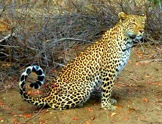 Linyanti Reserve, Botswana: Leopard