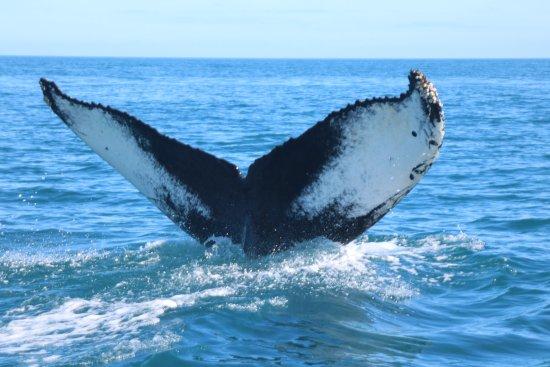 Husavik Whalewatching