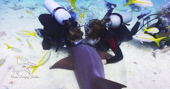 Tavernier, Flórida: Have you kissed a Shark?