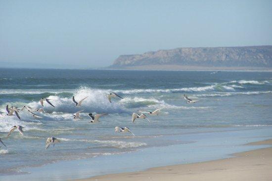 Bilde fra Eland's Bay