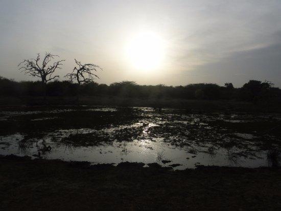 Hambantota, Sri Lanka : Sun setting and birds settling