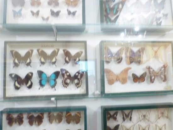 Viso del Marques, Espanha: Mariposas