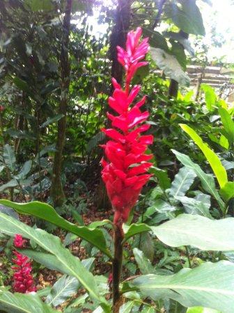 Parc des Mamelles, le Zoo de Guadeloupe : photo1.jpg