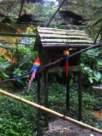 Parc des Mamelles, le Zoo de Guadeloupe : photo3.jpg
