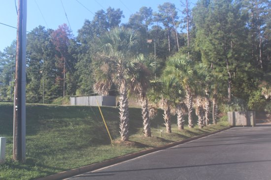 Milledgeville, GA: Pretty Palm trees, great location to many restraurants and shopping.
