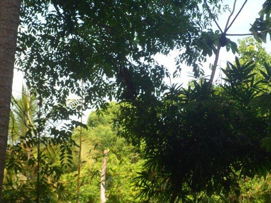 Parque Nacional Natural Tayrona: verde que te quiero verde