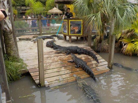 Kenansville, FL: pasto