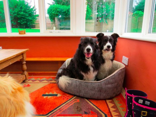 Okehampton, UK: Ross and Ellie enjoying the dog bed in the conservatory