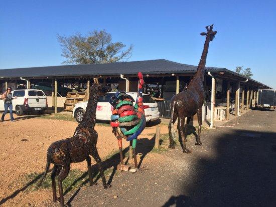 Hillcrest, Южная Африка: Жирафы