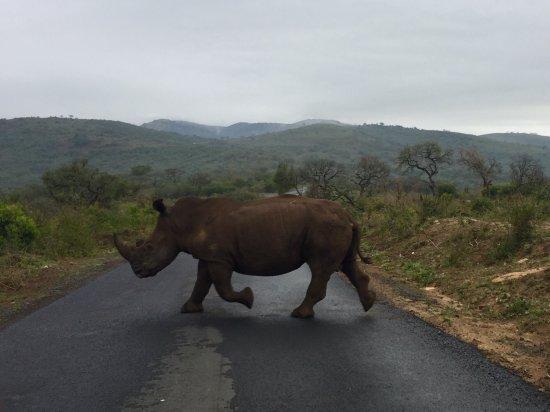 Ubizane Wildlife Reserve: photo1.jpg