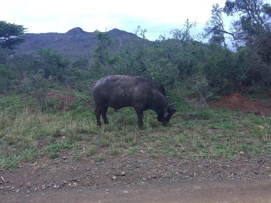 Ubizane Wildlife Reserve: photo2.jpg