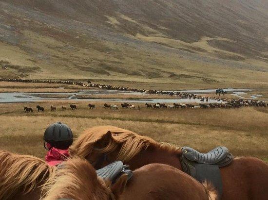Saudarkrokur, Island: Annual Horse Round-up near Hofsos, Iceland