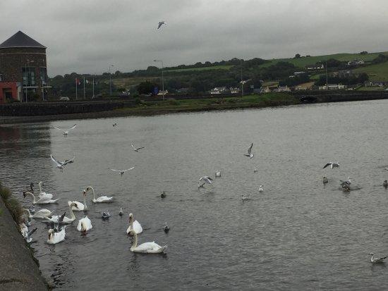 Rosscarbery, Irlanda: The Lagoon