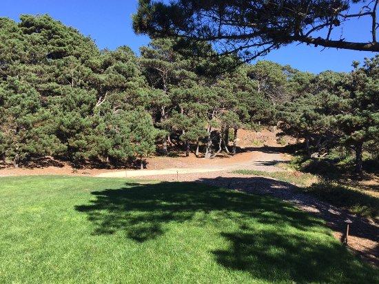 Jenner, Kalifornien: Forest View