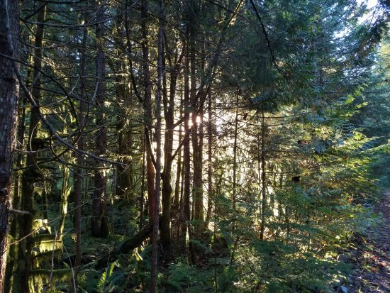Valley Fishing Guides Day Trips: Sunlight in the forest