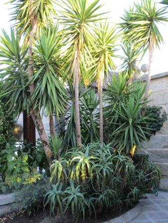 Hotel Playa de Vigo: Exterior grounds.