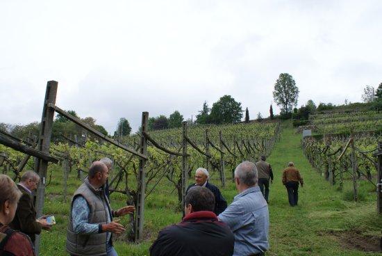 Piverone, Italy: Visita con guida alla vigna di proprietà della cantina In Viverone