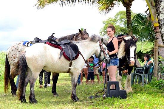 Pahoa, Гавайи: Icelandic horse